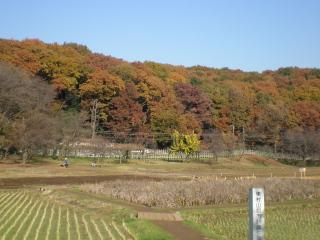 hatikokuyama1.jpg