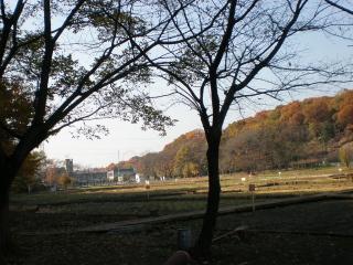 hatikokuyama2.jpg